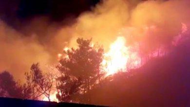 صورة الحرائق تلتهم مساحات زراعية ضخمة في طرطوس