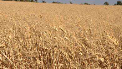 صورة وزير زراعة سابق بانتقاده للحالي: كلامك إنشائي والزراعة السورية في خطر