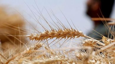 """صورة """"في الحديقة أو البستان"""".. وزير سوري يدعو لزراعة """"كل متر"""""""